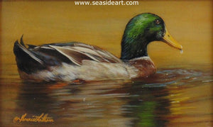 Golden (Mallard Duck)
