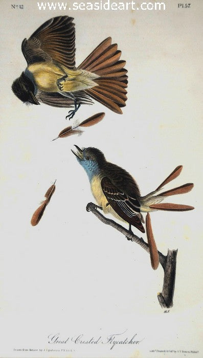 Great Crested Flycatcher by John James Audubon - Seaside Art Gallery