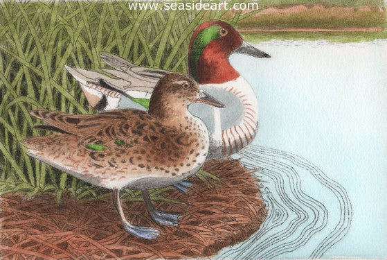 D-Green-winged Teals IV by David Hunter - Seaside Art Gallery