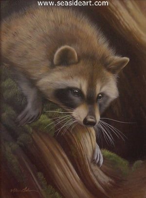 Investigating-Raccoon by Rebecca Latham - Seaside Art Gallery