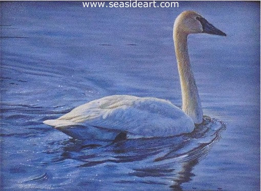 Late Afternoon (Trumpeter Swan) by Rebecca Latham - Seaside Art Gallery