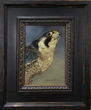Looking On (Peregrine)