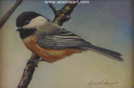 Latham B-Morning Guest (Black Capped Chickadee)