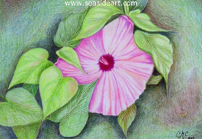 Pretty in Pink - Hibiscus by Connie Cruise - Seaside Art Gallery
