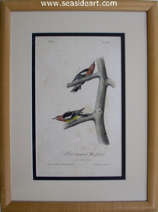 Red-breasted Woodpecker by John James Audubon - Seaside Art Gallery