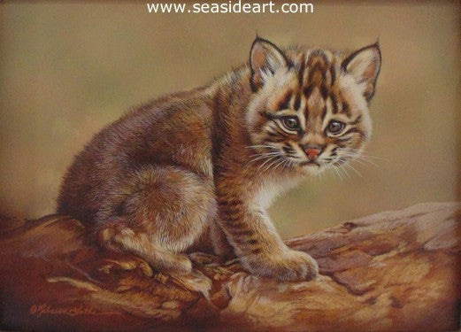 Shy - Bobcat Kitten