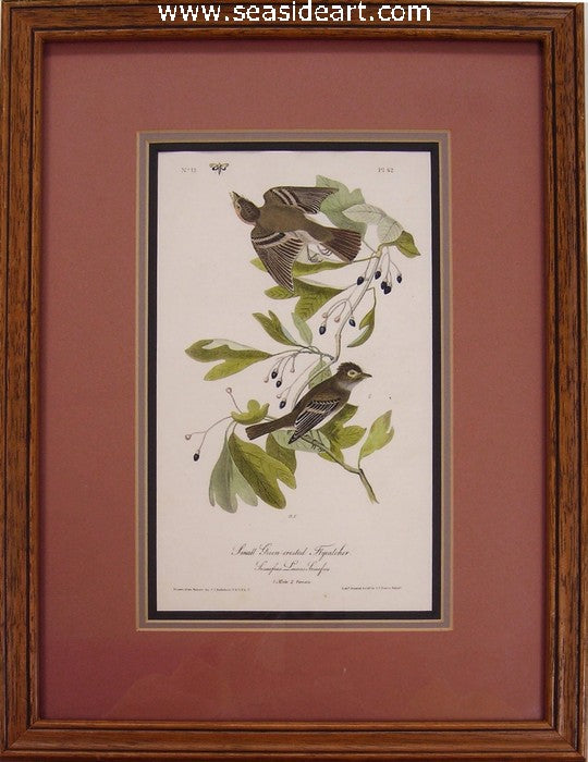Small Green-crested Flycatcher by John James Audubon - Seaside Art Gallery