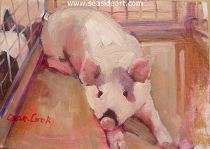 Snowball, The Pig by Jean Cook - Seaside Art Gallery