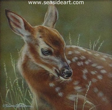 Spring Dreams (Whitetail Fawn)