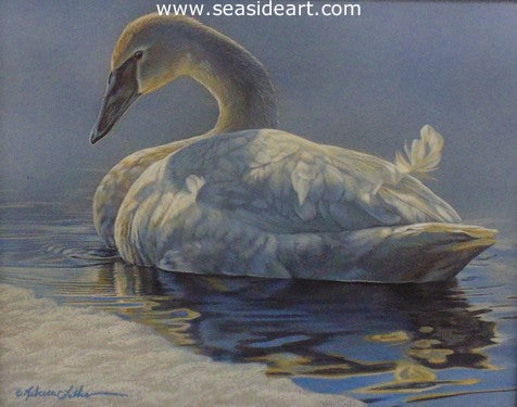 Spring Thaw (Trumpeter Swan)