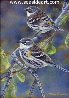 Spring Visitors (Yellow-rumped Warblers)