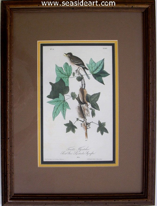 Trail's Flycatcher by John James Audubon - Seaside Art Gallery