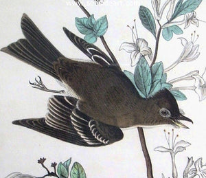 Wood Pewee Flycatcher by John James Audubon - Seaside Art Gallery