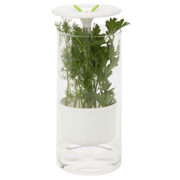 Glass Herb Preserver