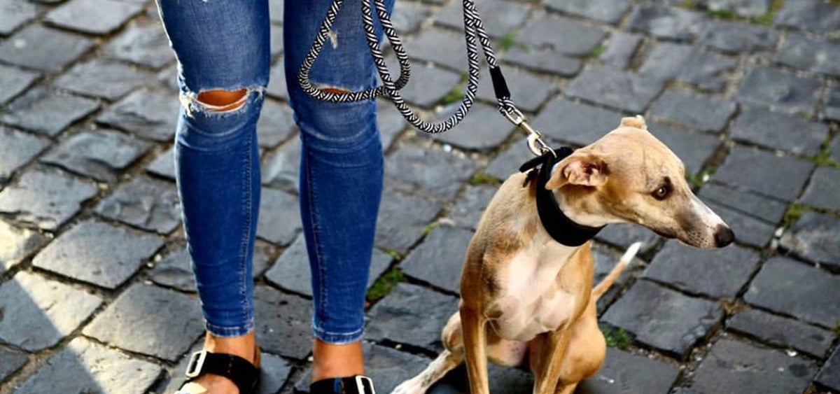 leashes for whippets