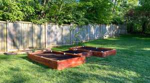 Building Raised Garden Beds in Tennessee