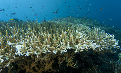 Coral Bleaching - What is it and why should we care?