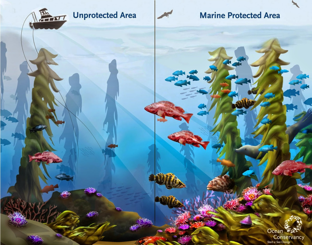 Why Are Marine Protected Areas Important?