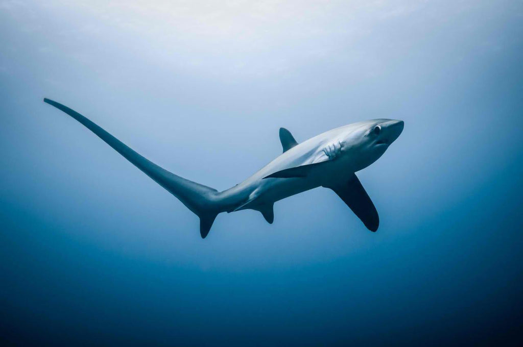 10 Bizarre facts about sharks that you would never know!