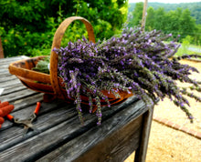 Organic Lavender, Large Bundle