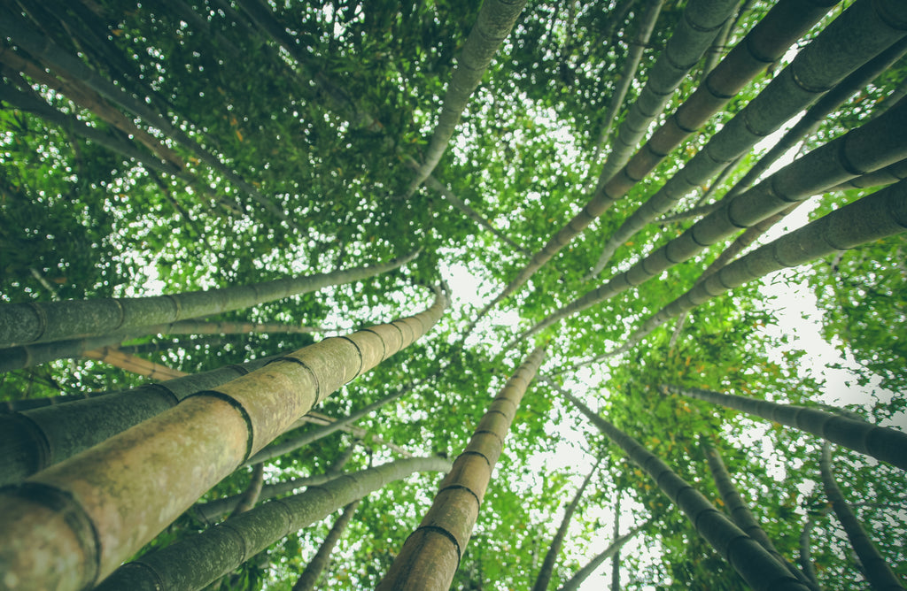 6 reasons why bamboo is better than cotton