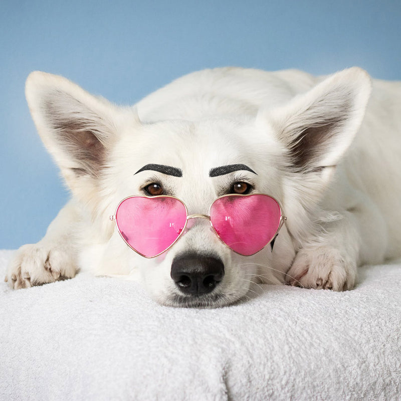 Your pooch can have perfect brows in seconds too...