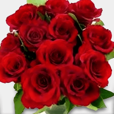 Bouquet of 12 World's Best Ecuador Roses