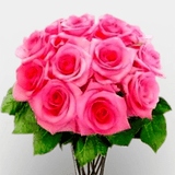 Vase of twelve pink world's best Ecuador roses