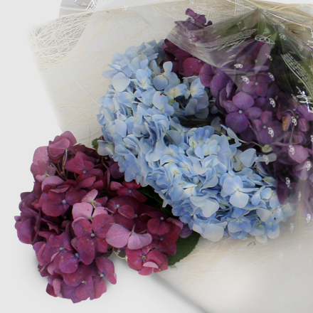 Bouquet of Seasonal Hydrangea