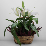 Dapo firn in a basket with one stem cut flower