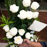 Vase of twelve white world's best Ecuador roses