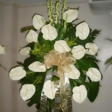 Anthuriums sympathy arrangement