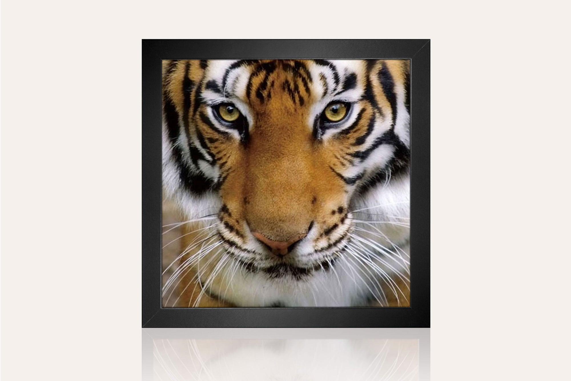 Tiger Acrylic Wall Art by Venini