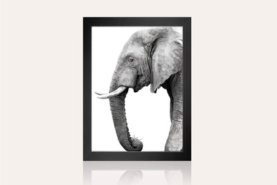 The Tusk Acrylic Wall Art