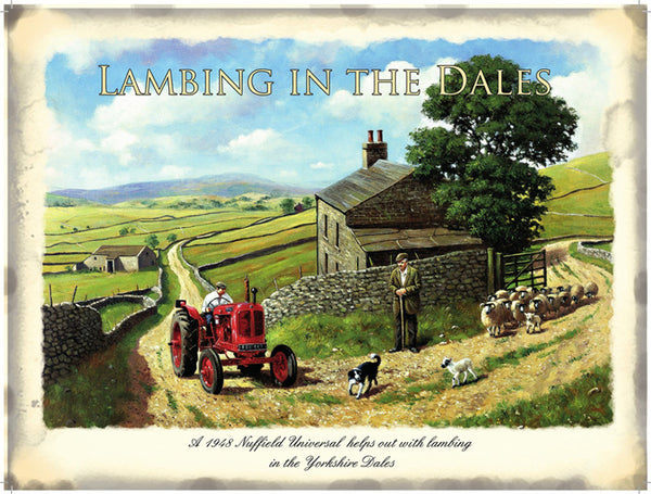 Lambing in the Dales, Yorkshire Farming, Sheep Dog Small Metal/Steel Wall Sign