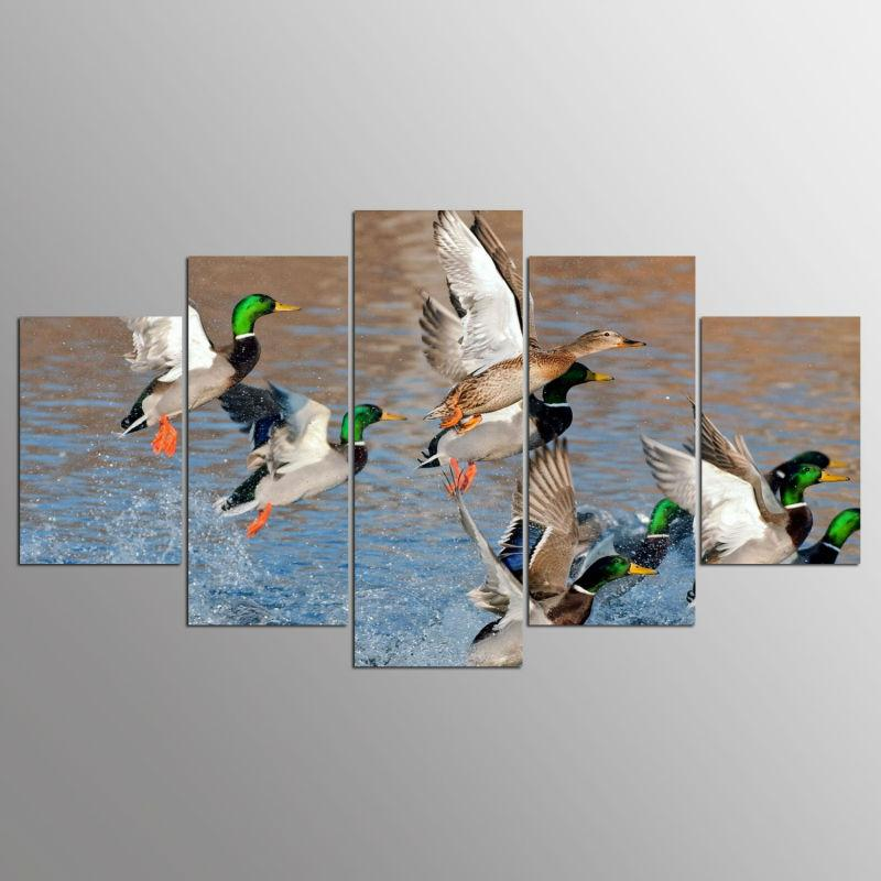 Animal Duck Hunting Landscape - It Make Your Day