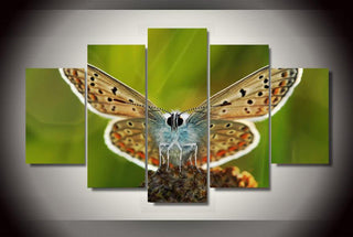 Framed 5 Piece Butterfly On The Flower Canvas Wall Art Sets - It Make Your Day