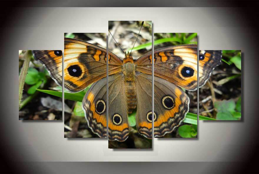 Framed 5 Piece Modern Colorful Butterfly Canvas Wall Art Sets - It Make Your Day