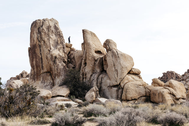 Joshua Tree Travel Guide