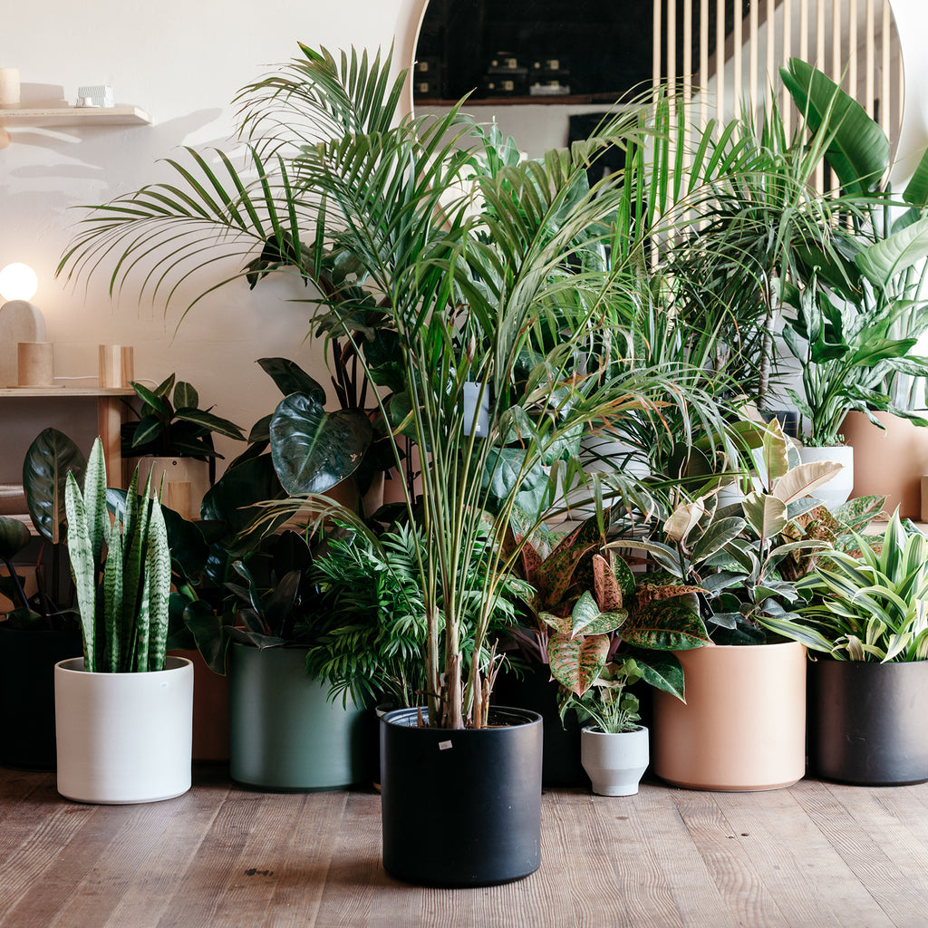 The Norden Guide to Taking Care of Houseplants