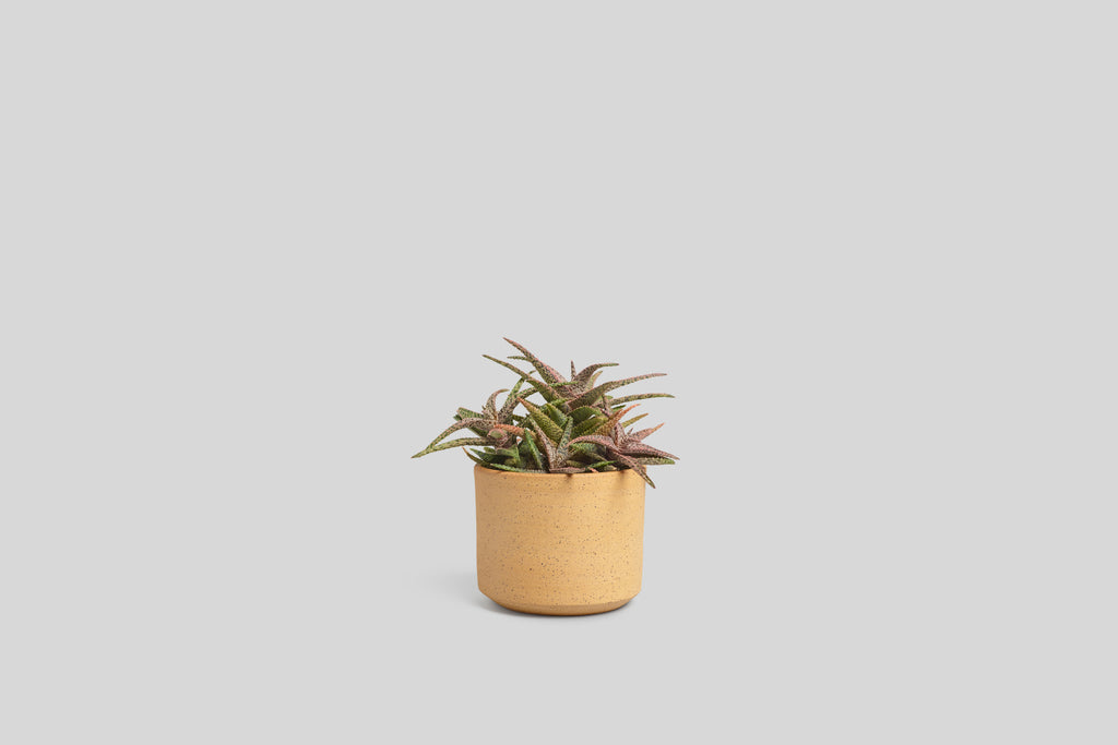 "Norden 5"" Planter (Raw Speckle)"