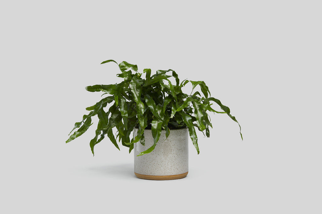 "Norden 7"" Planter (White Speckle)"