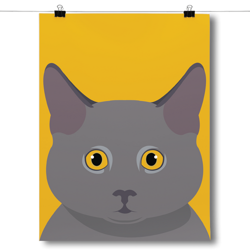 British Shorthair Face