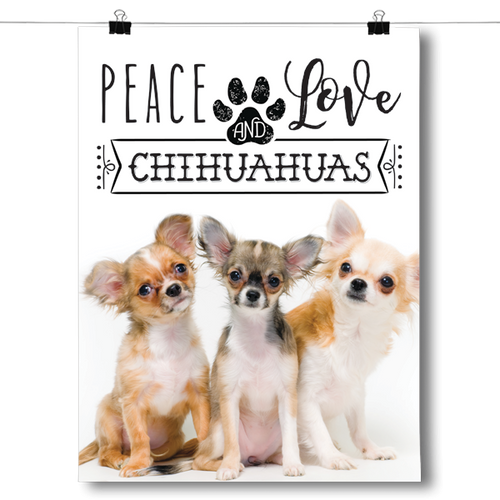 Peace Love and Chihuahuas - Real Life