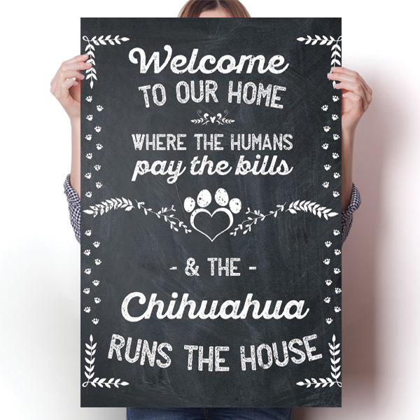 The Chihuahua Runs The House