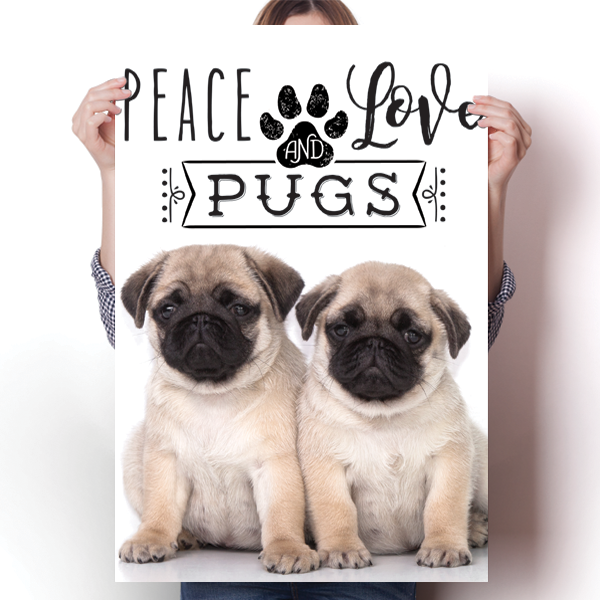 Peace Love and Pugs - Real Life