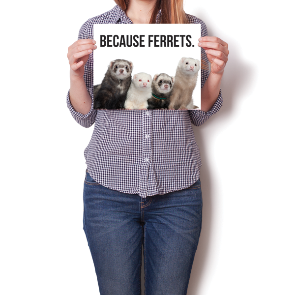 Because Ferrets.