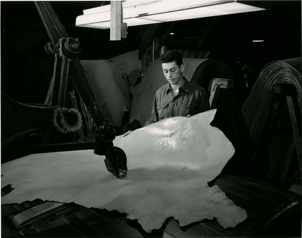 AK Salz California Saddle Leather at the Salz Tannery in Santa Cruz, 1955