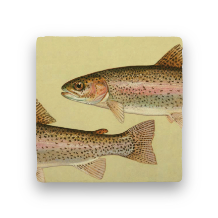 Rainbow Trout-Animals-Paisley & Parsley-Coaster