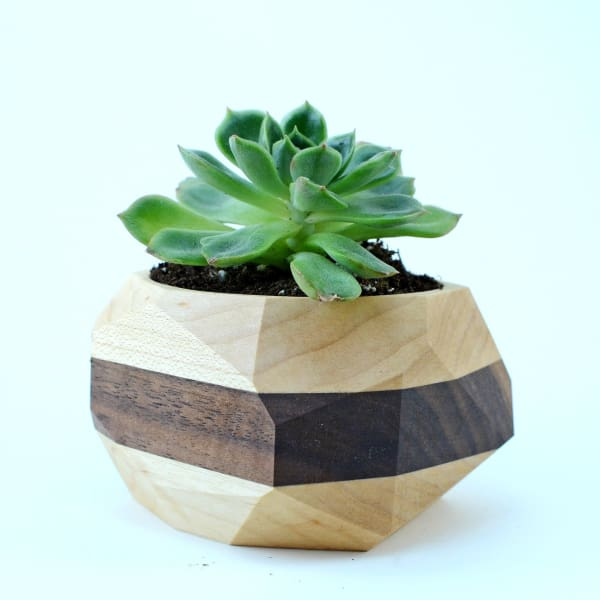 Geometric Cactus & Succulent Planter - Home & Garden - Home Decor